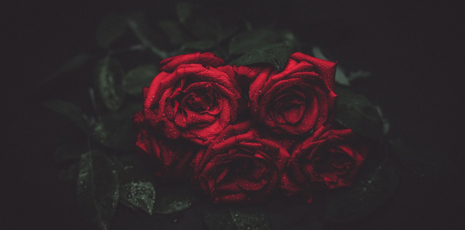 Der Fluch der Rose – Rezension