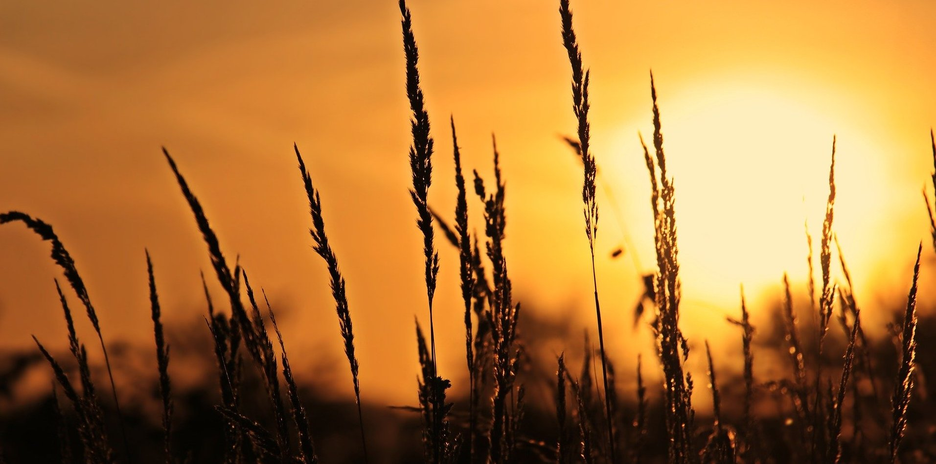 Im grausamen Licht der Sonne – Rezension